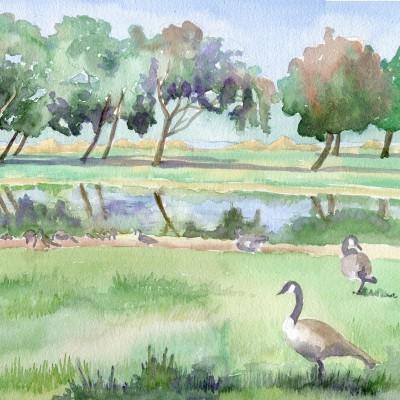 miller-knox-regional-shoreline-park