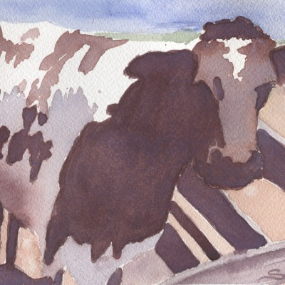 cow-at-little-farm