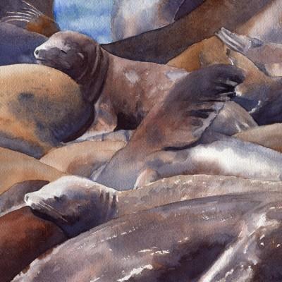 pier-39-sunning-sea-lions