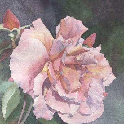 san-francisco-rose