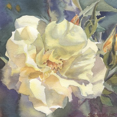 yellow-rose-buds
