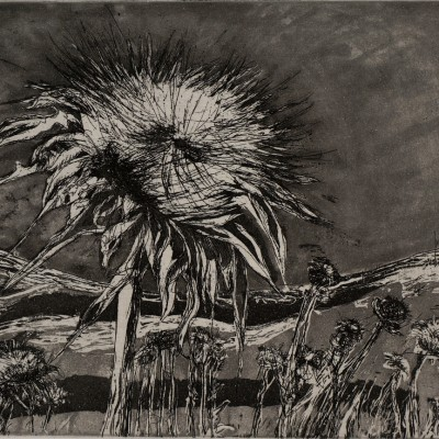 marian-sims-harris-thistle-on-lime-ridge-etching