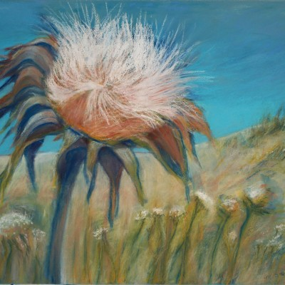 marian-sims-harris-thistle-on-lime-ridge-pastel